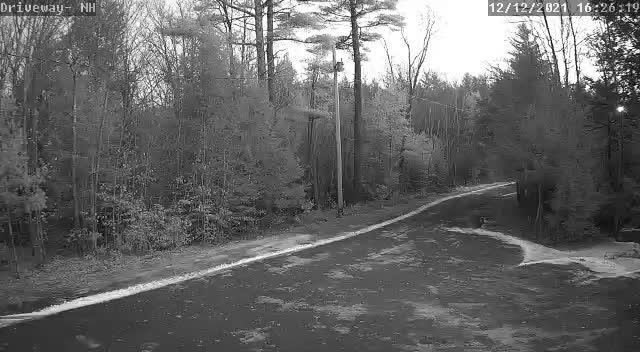 Driveway-NH